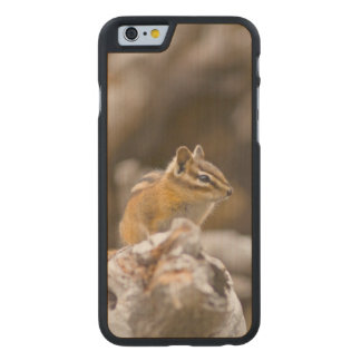 USA, Washington, North Cascades National Park 9 Carved Maple iPhone 6 Case