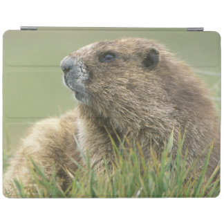 USA, Washington, Olympic NP, Olympic Marmot iPad Cover