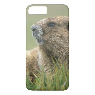 USA, Washington, Olympic NP, Olympic Marmot iPhone 8 Plus/7 Plus Case