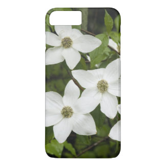 USA, Washington, Pacific Dogwood, Cornus iPhone 8 Plus/7 Plus Case