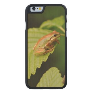 USA, Washington, Seattle, Discovery Park Carved Maple iPhone 6 Case