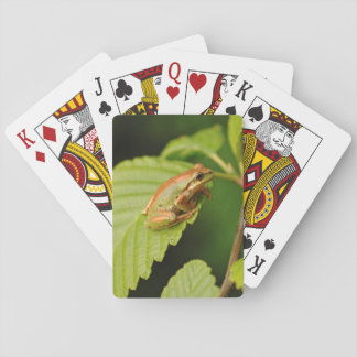 USA, Washington, Seattle, Discovery Park Playing Cards
