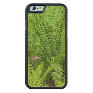 USA, Washington, Seattle, Washington Park Carved Maple iPhone 6 Bumper Case