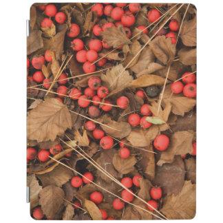 USA, Washington, Spokane County, Hawthorn Leaves iPad Cover