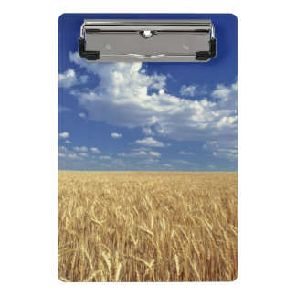 USA, Washington State, Colfax. Ripe wheat Mini Clipboard