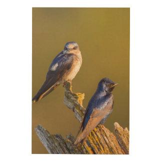 USA, Washington State. Female And Male Purple Wood Prints