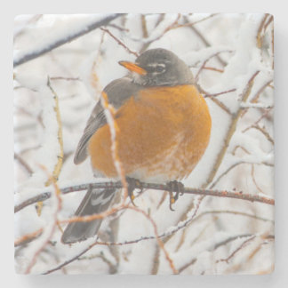 USA, Wyoming, American Robin roosting on willow Stone Coaster
