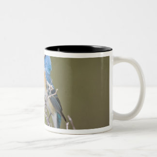 USA, Wyoming, Bighorn National Recreation 2 Two-Tone Coffee Mug