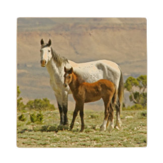 USA, Wyoming, Carbon County. Wild horse mare Wood Coaster