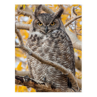 USA, Wyoming, Great Horned Owl roosting Postcard