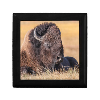 USA, Wyoming, Yellowstone National Park, Bison Gift Box