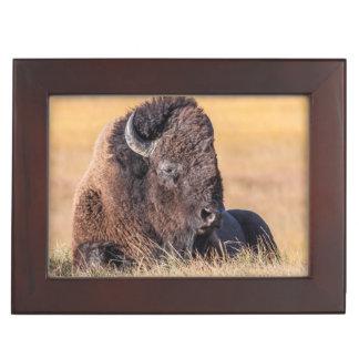 USA, Wyoming, Yellowstone National Park, Bison Keepsake Box