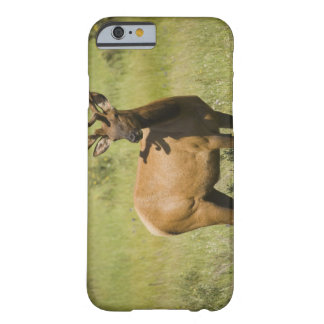 USA, Wyoming, Yellowstone National Park, Elk Barely There iPhone 6 Case