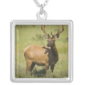 USA, Wyoming, Yellowstone National Park, Elk Silver Plated Necklace