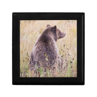 USA, Wyoming, Yellowstone National Park, Grizzly 2 Gift Box
