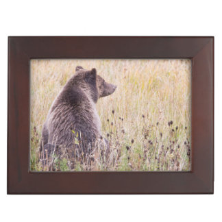 USA, Wyoming, Yellowstone National Park, Grizzly 2 Keepsake Box