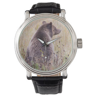 USA, Wyoming, Yellowstone National Park, Grizzly 2 Watch