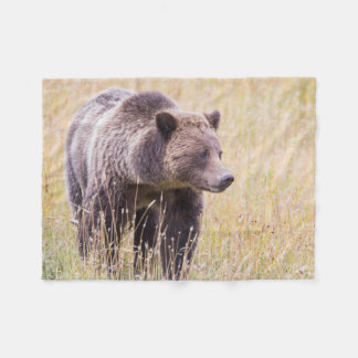 USA, Wyoming, Yellowstone National Park, Grizzly 3 Fleece Blanket