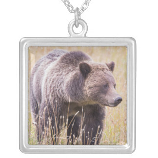 USA, Wyoming, Yellowstone National Park, Grizzly 3 Silver Plated Necklace