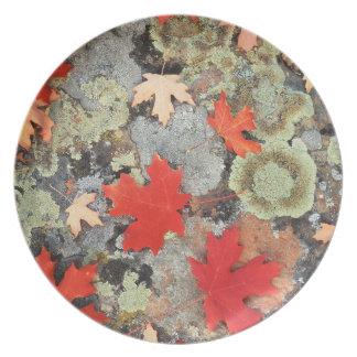 Utah, Fishlake National Forest. Patterns Plate
