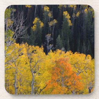 Utah. USA. Aspen Trees In Autumn On The Sevier Coaster