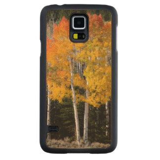 Utah, USA. Aspen Trees (Populus Tremuloides) 3 Carved Maple Galaxy S5 Case