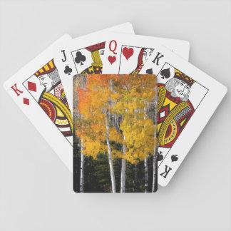 Utah, USA. Aspen Trees (Populus Tremuloides) 3 Playing Cards