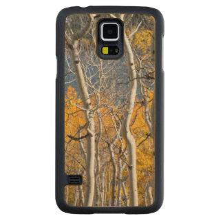 Utah, USA. Aspen Trees (Populus Tremuloides) Carved Maple Galaxy S5 Case