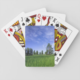 UTAH. USA. Ponderosa pines Pinus ponderosa) & Playing Cards