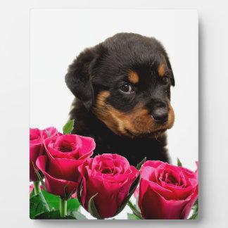 Valentine Rose Rottweiler Puppy Plaque