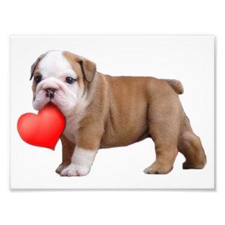 Valentine's bulldog puppy art photo