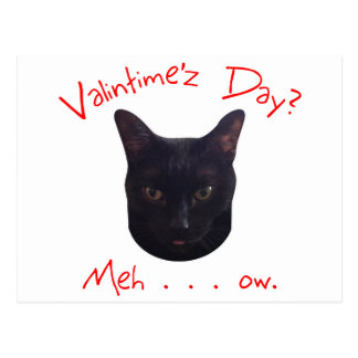 Valentine's Day Cat Meh Postcard