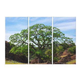 Valley Oak Tree Canvas Print