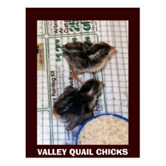 VALLEY QUAIL CHICKS POSTCARD