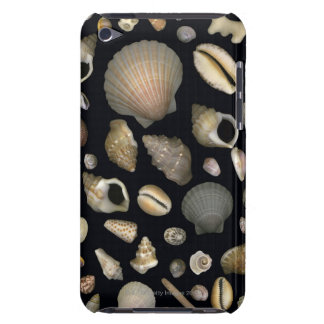 Various sea shells iPod touch covers