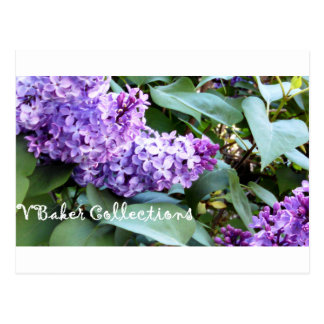 VBaker Collections Lilacs Postcard