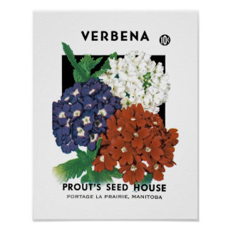 Verbena Seed Packet Label Poster