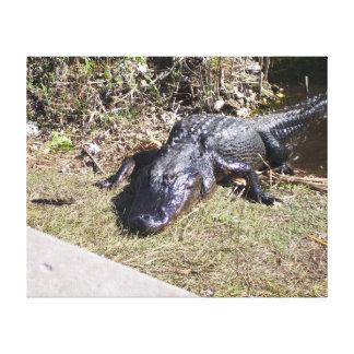 Very content Black Alligator of the Everglades Canvas Print