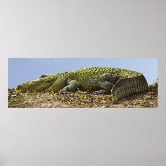 Very Large Alligator Panoramic Poster