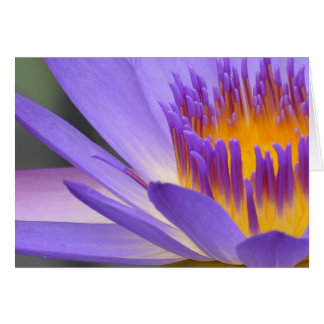 Vesta Blue Greeting Card