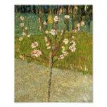 Vincent Van Gogh Almond Tree In Blossom Vintage