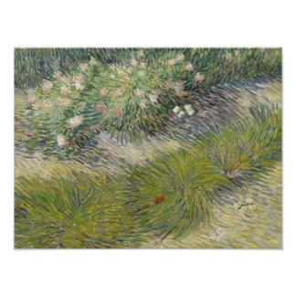 Vincent van Gogh - Grass and Butterflies Photographic Print