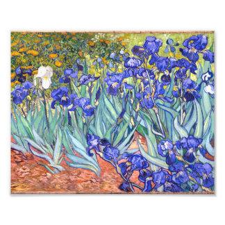 Vincent Van Gogh Irises Floral Vintage Fine Art Art Photo