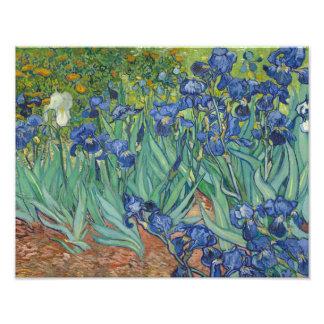 Vincent van Gogh - Irises Photograph