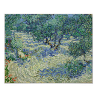 Vincent van Gogh - Olive Orchard Art Photo
