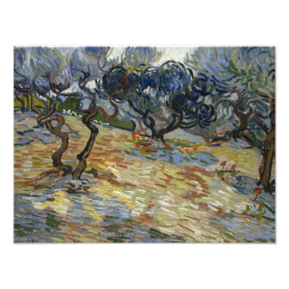 Vincent van Gogh - Olive Trees Photo Print