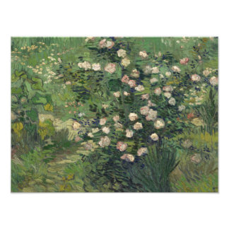 Vincent van Gogh - Roses Photo Print