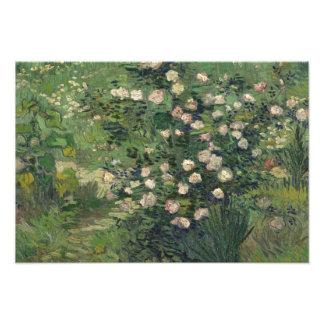Vincent van Gogh - Roses Photograph