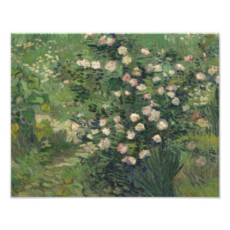 Vincent van Gogh - Roses Photographic Print