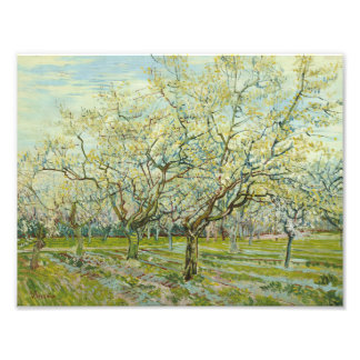 Vincent van Gogh - The White Orchard Photograph